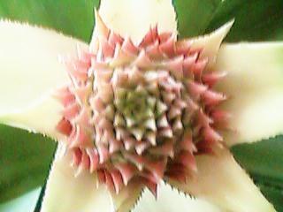 真上から見た花穂